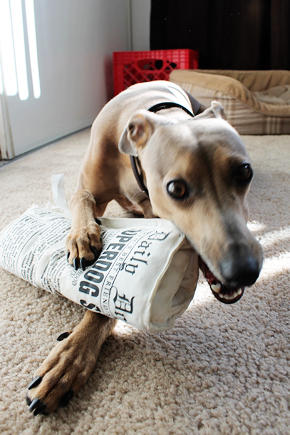 Mosey & Newspaper