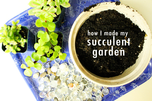 How I made my succulent garden