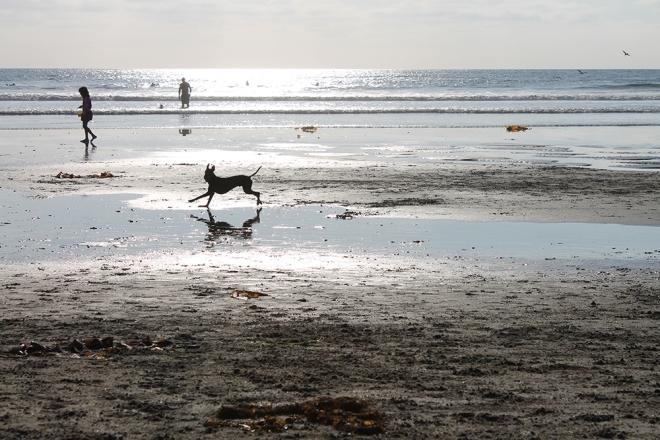 mosey_beach0