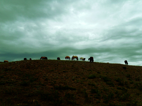 JB_Mongolia06